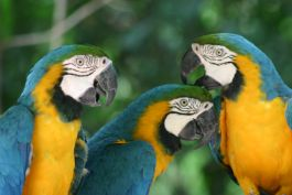 Amazing wildlife in the Amazon rainforest