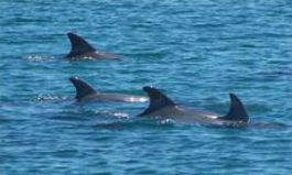 Volunteer With Dolphins Near Perth