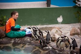 Sea Bird Centre in South Africa