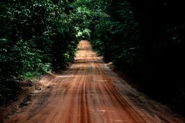 A typical jungle road!
