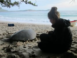 Watching turtle back to the sea