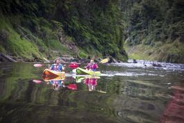 Stray New Zealand - Kayaking on the Whanganui