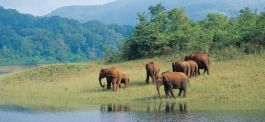 Elephants at the Periyar National Park