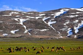 The high pastures of the Moroccan Mongolia