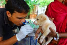 Volunteer at the Animal Rescue Centre in India