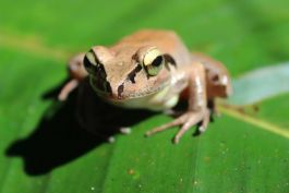 Learn to identify frog species