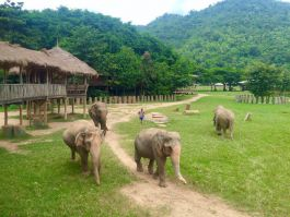 Volunteer with elephants in a beautiful setting in northern Thailand