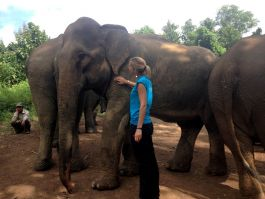 Meeting the elephants