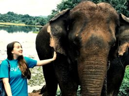 Volunteer meets the elephants